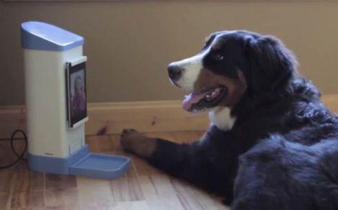 iCPooch-dog-skype-4