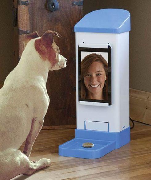 iCPooch-dog-skype-5