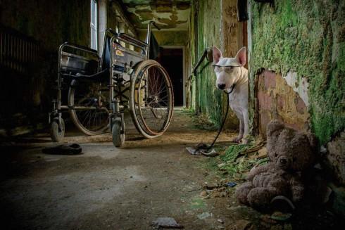 adorablebullterrier-11-900x600