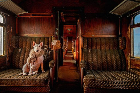 adorablebullterrier-13-900x600